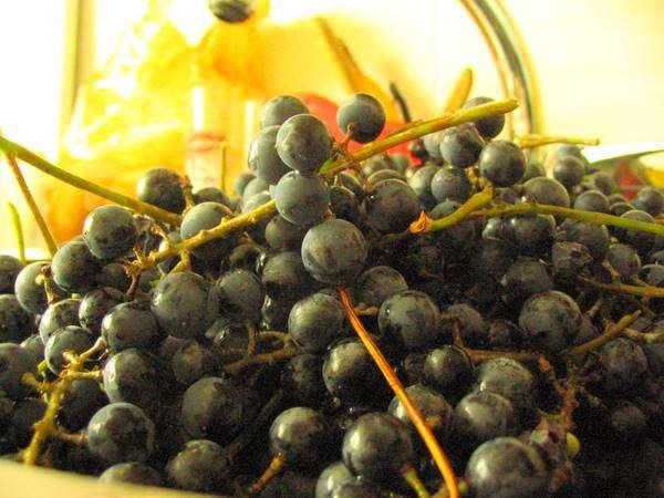 wino2.jpg